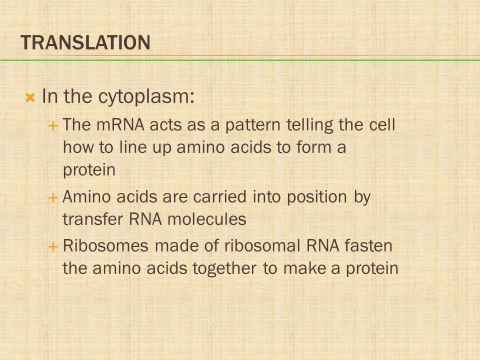 Translation In the cytoplasm: