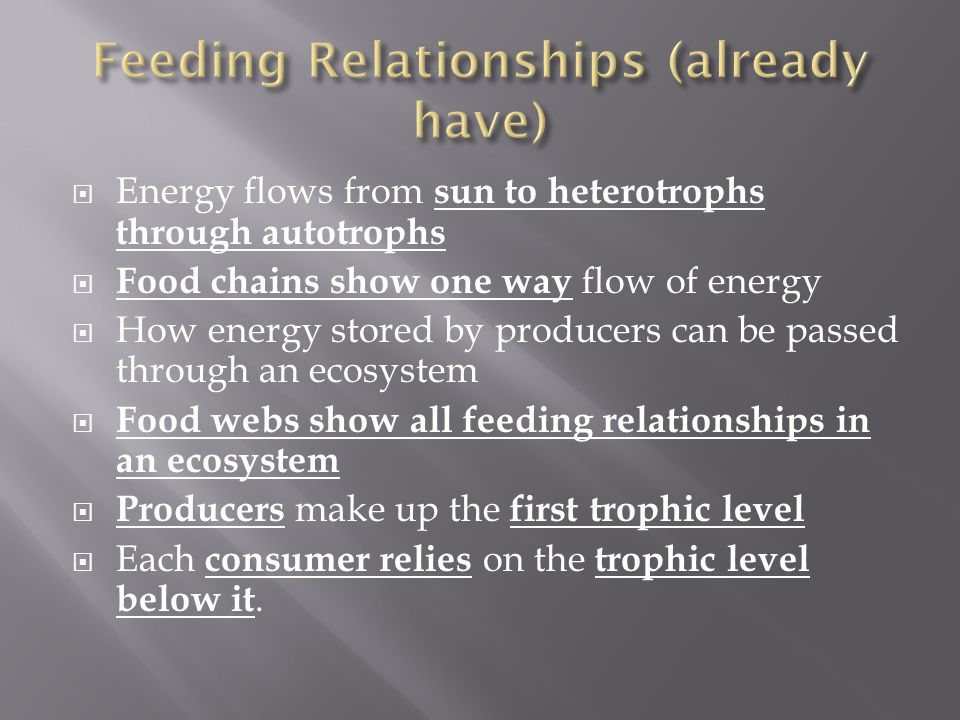Feeding Relationships (already have)