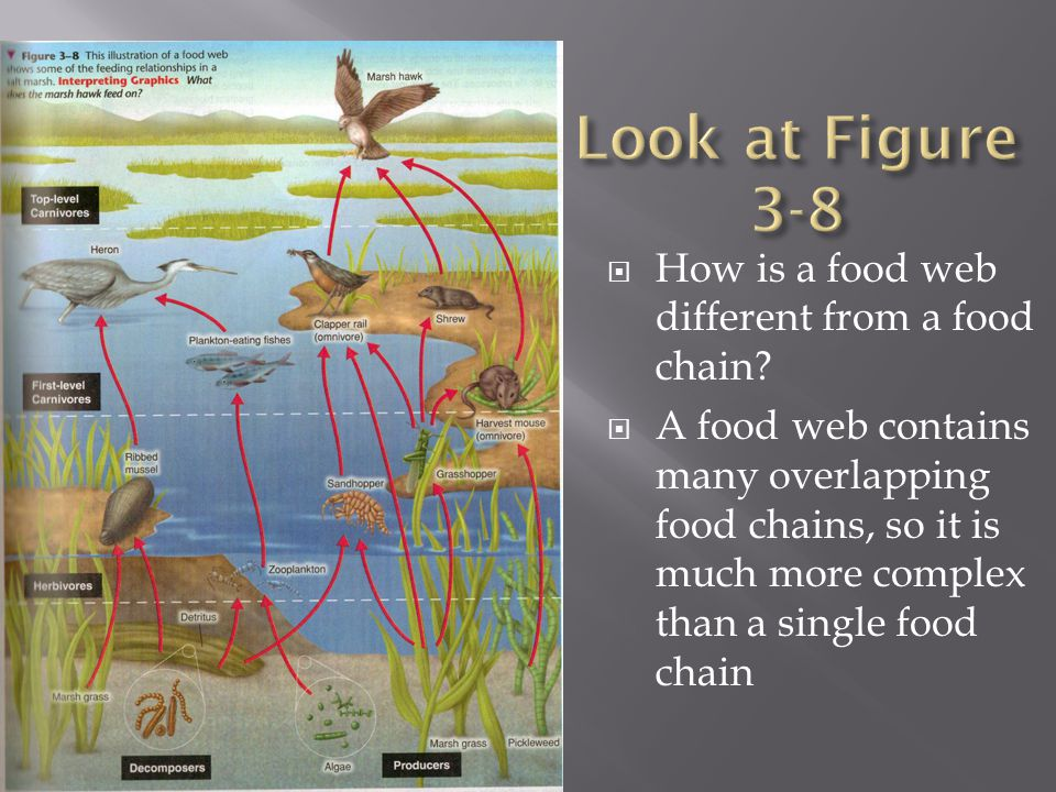 Look at Figure 3-8 How is a food web different from a food chain