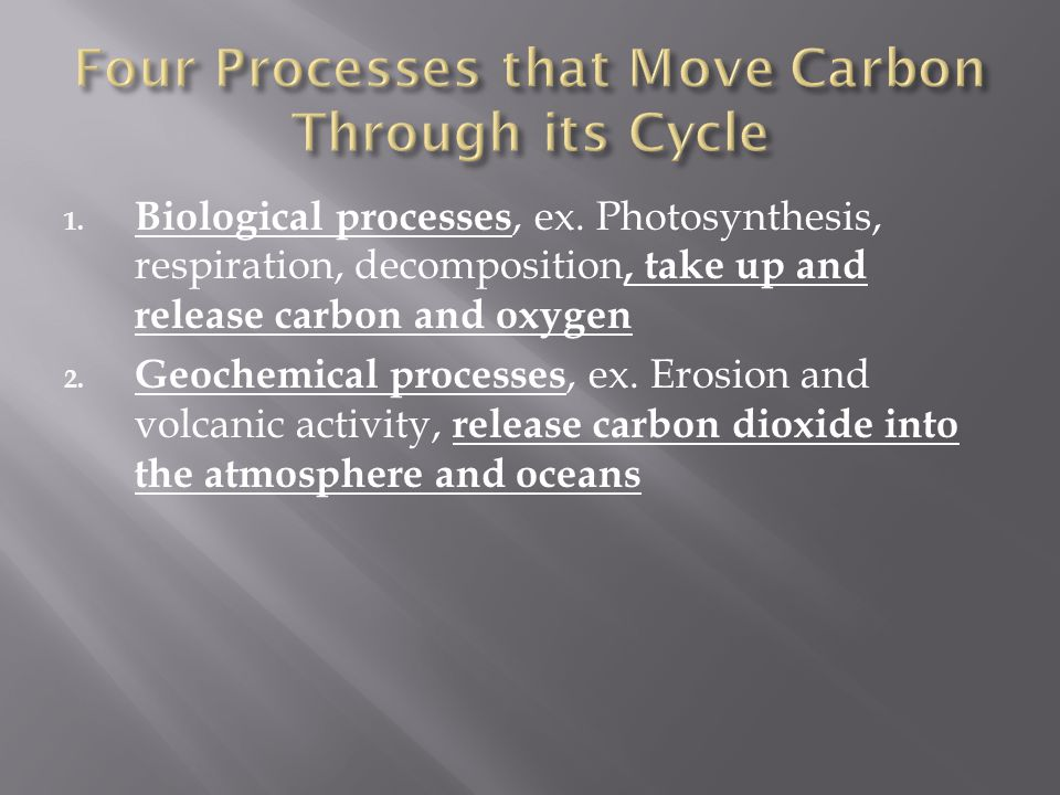 Four Processes that Move Carbon Through its Cycle
