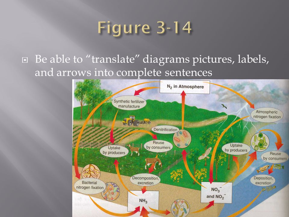 Figure 3-14 Be able to translate diagrams pictures, labels, and arrows into complete sentences
