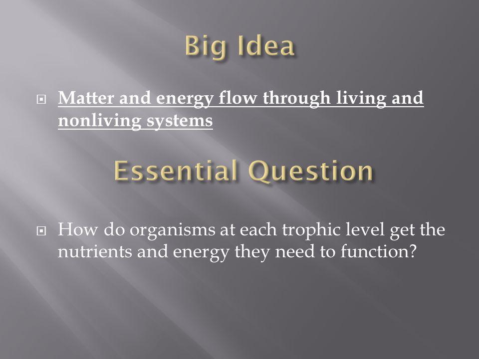 Big Idea Essential Question