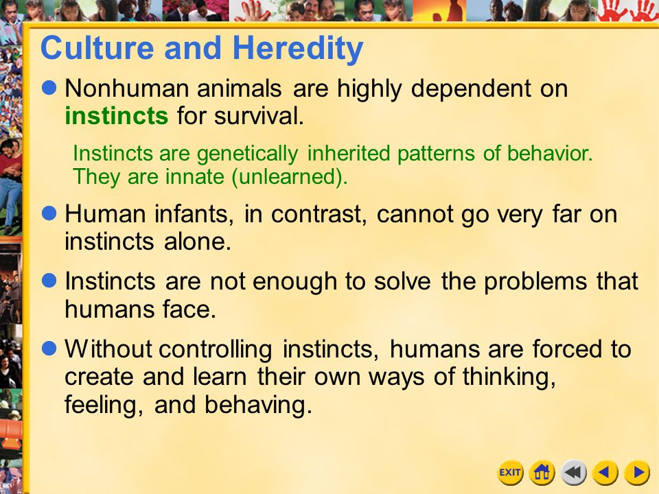 Culture and Heredity Nonhuman animals are highly dependent on instincts for survival.