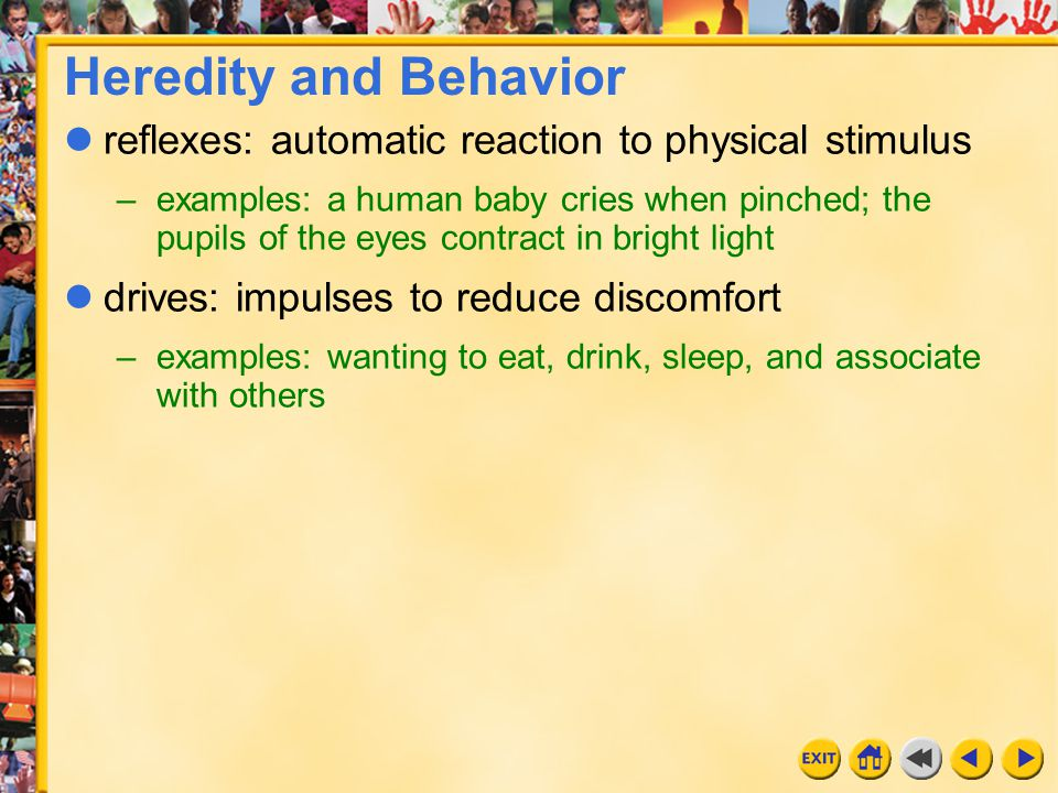 Heredity and Behavior reflexes: automatic reaction to physical stimulus.