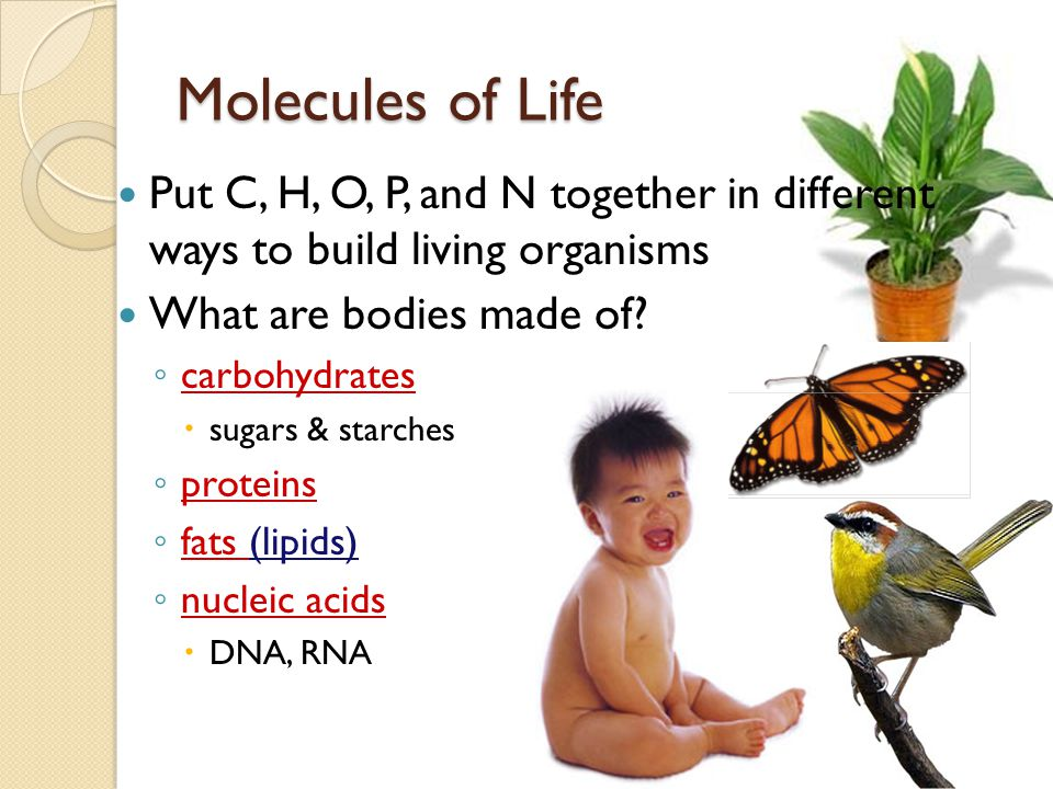 Molecules of Life Put C, H, O, P, and N together in different ways to build living organisms. What are bodies made of