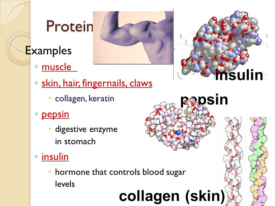 Proteins insulin pepsin collagen (skin) Examples muscle