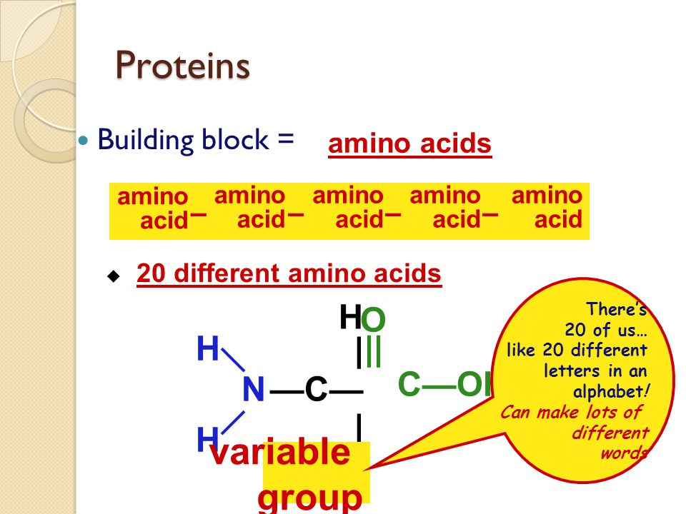 Proteins variable group —N— H | —C— C—OH || O Building block =