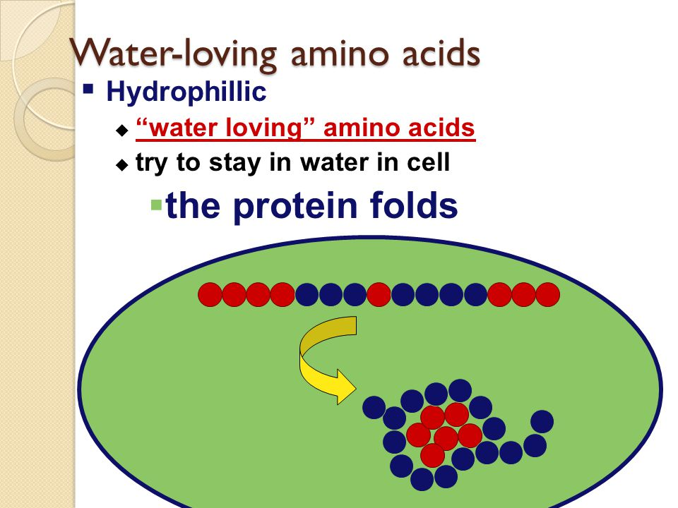 Water-loving amino acids