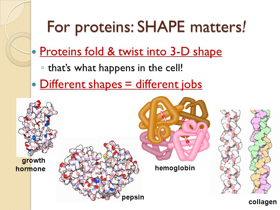 For proteins: SHAPE matters!