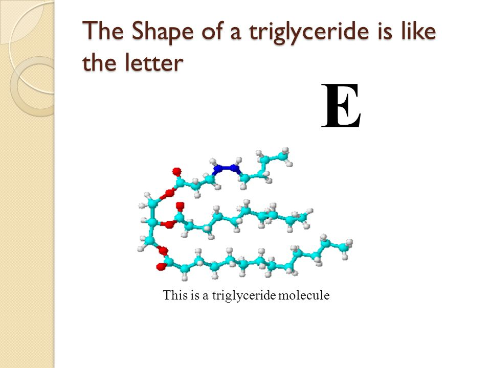 The Shape of a triglyceride is like the letter