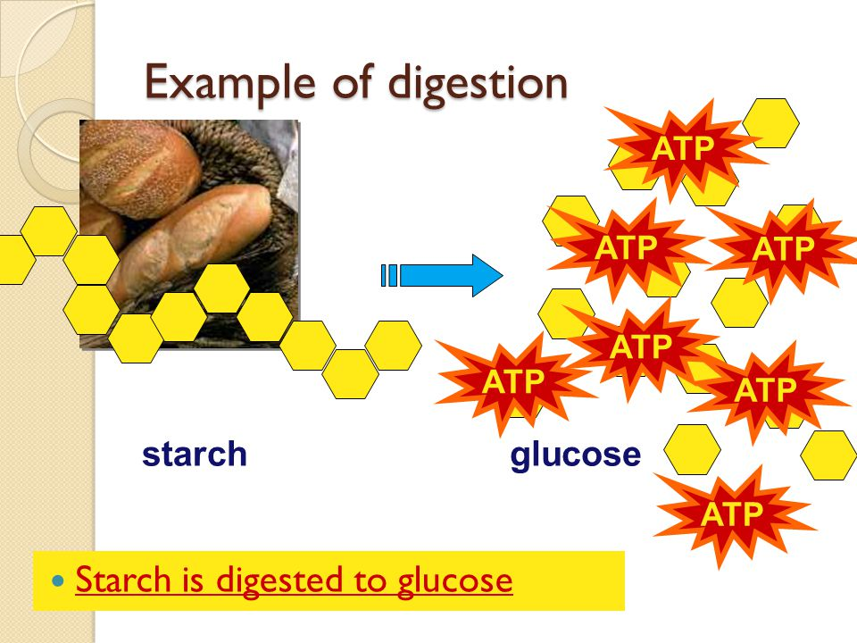 Example of digestion Starch is digested to glucose starch glucose ATP