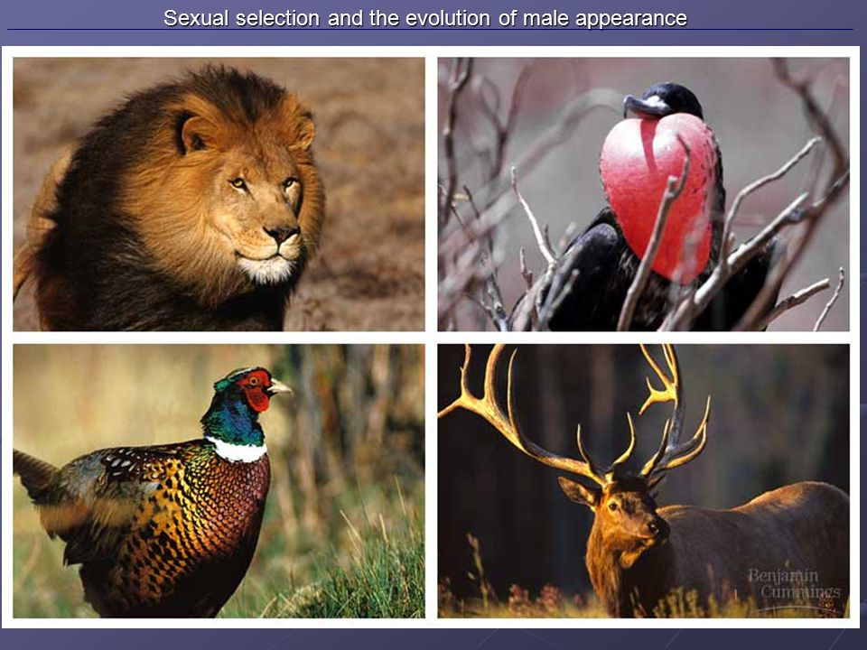 Sexual selection and the evolution of male appearance