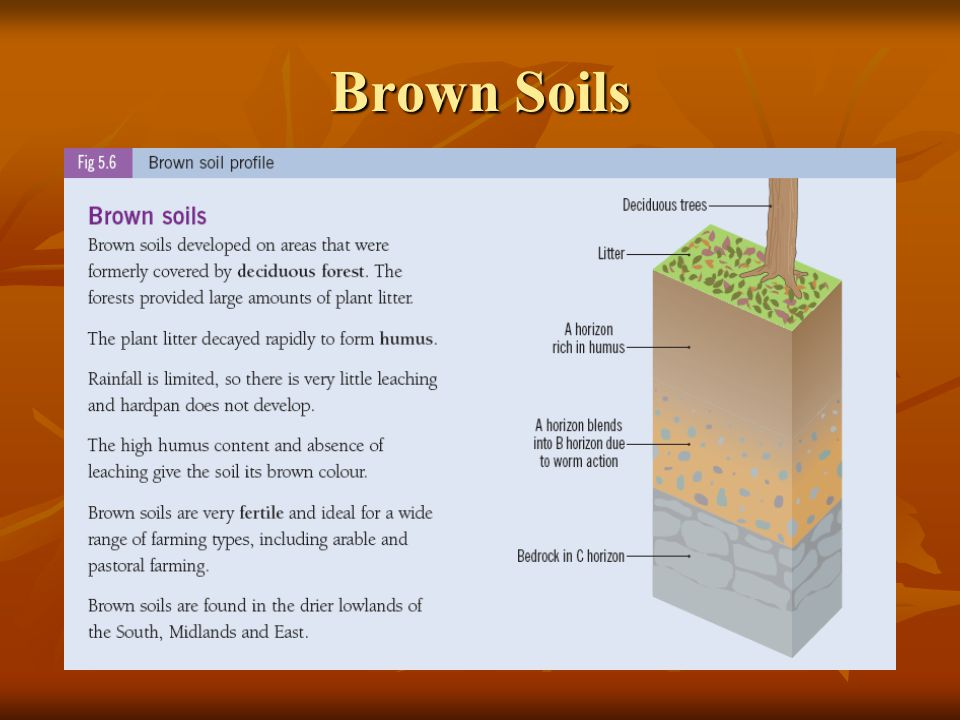 Brown Soils