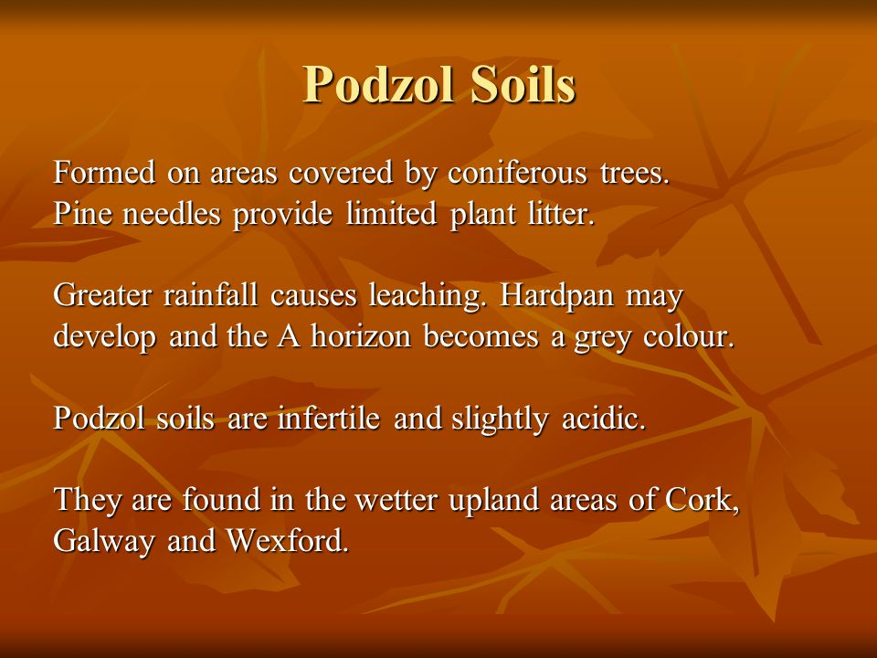 Podzol Soils Formed on areas covered by coniferous trees.