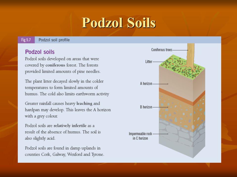 Podzol Soils