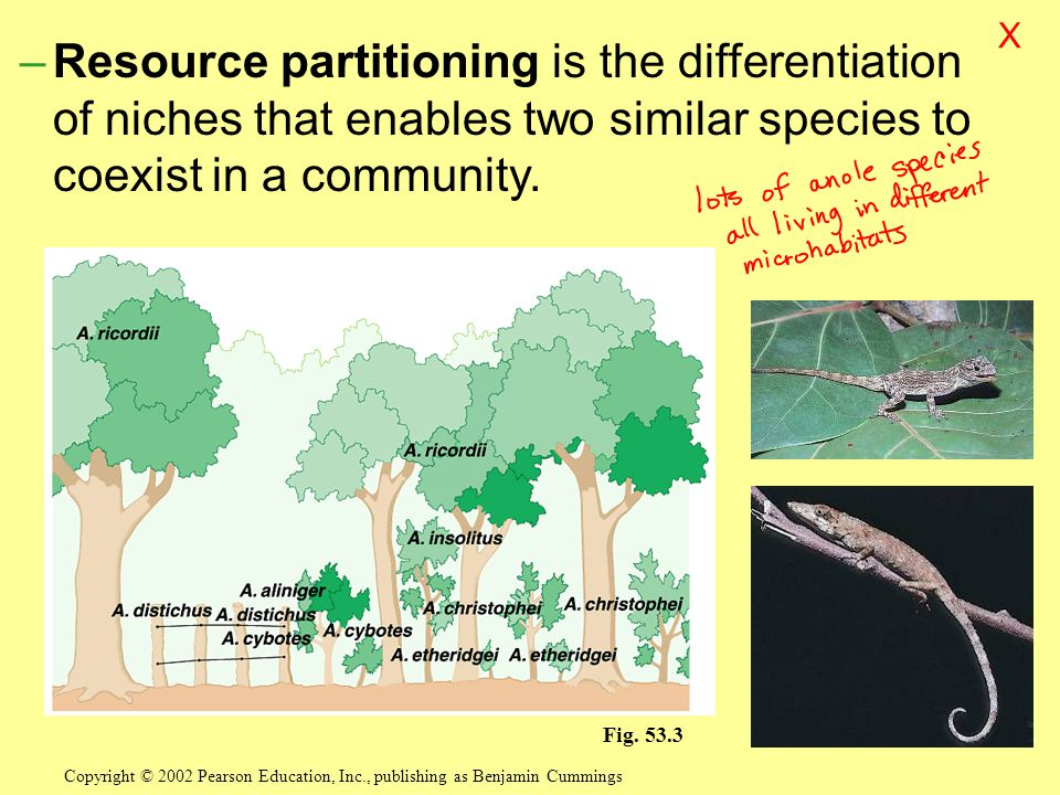 X Resource partitioning is the differentiation of niches that enables two similar species to coexist in a community.