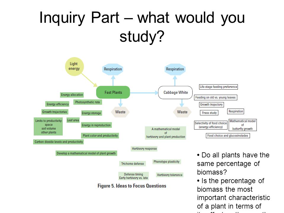 Inquiry Part – what would you study