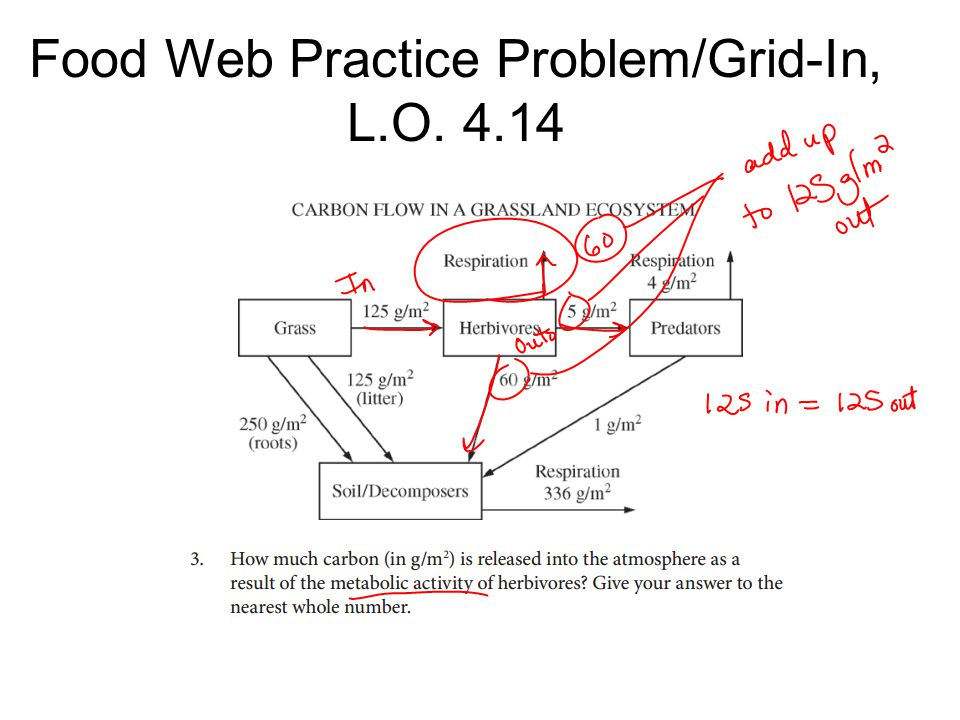 Food Web Practice Problem/Grid-In, L.O. 4.14
