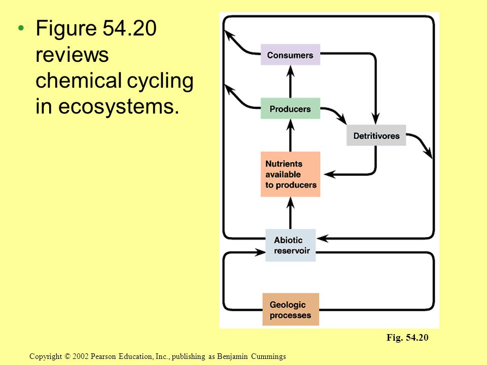 Figure 54.20 reviews chemical cycling in ecosystems.