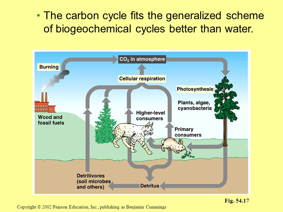 The carbon cycle fits the generalized scheme of biogeochemical cycles better than water.