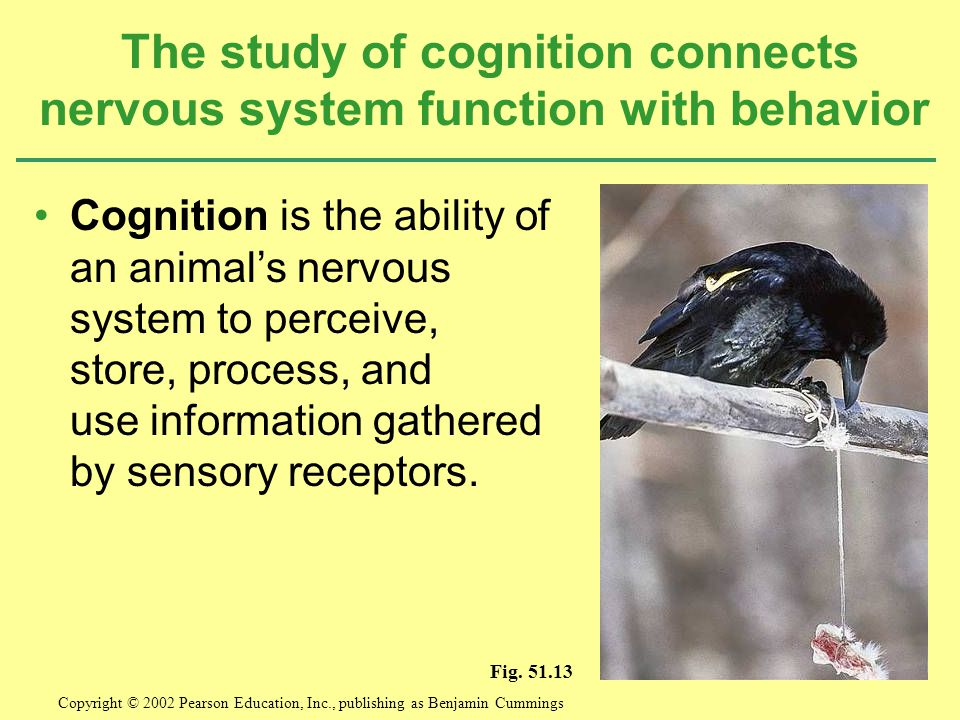 The study of cognition connects nervous system function with behavior