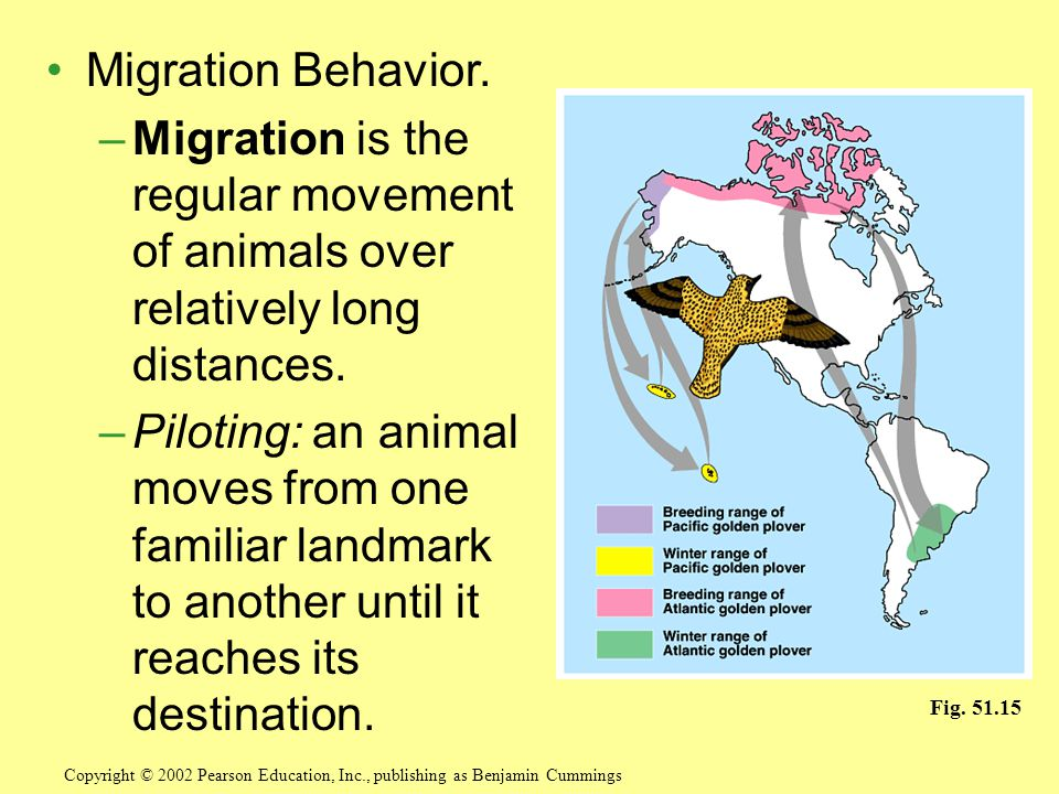 Migration Behavior. Migration is the regular movement of animals over relatively long distances.