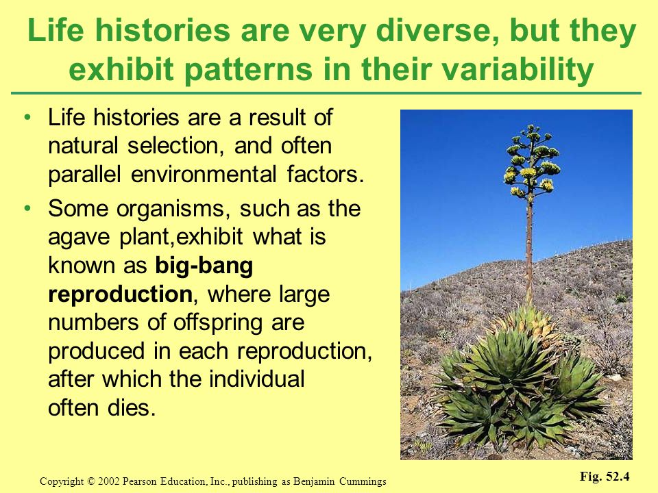 Life histories are very diverse, but they exhibit patterns in their variability