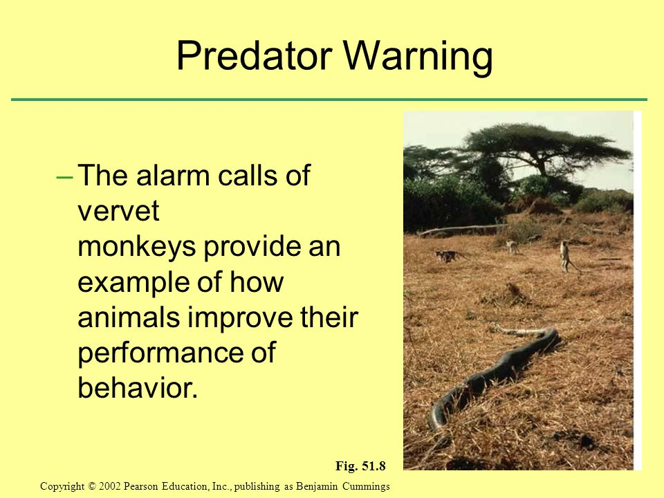 Predator Warning The alarm calls of vervet monkeys provide an example of how animals improve their performance of behavior.