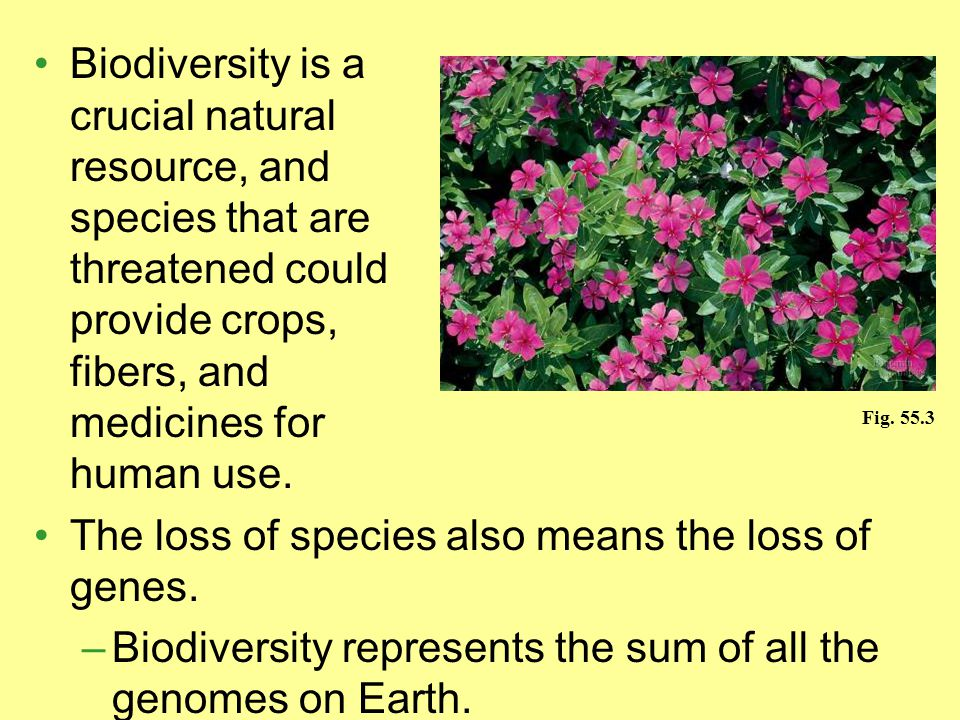 The loss of species also means the loss of genes.