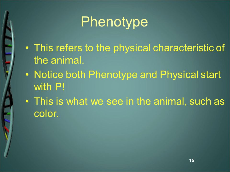 Phenotype This refers to the physical characteristic of the animal.