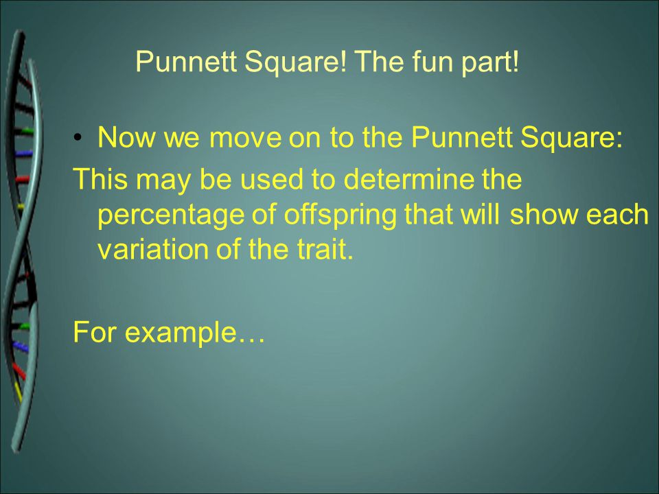 Punnett Square! The fun part!