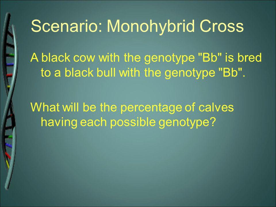 Scenario: Monohybrid Cross