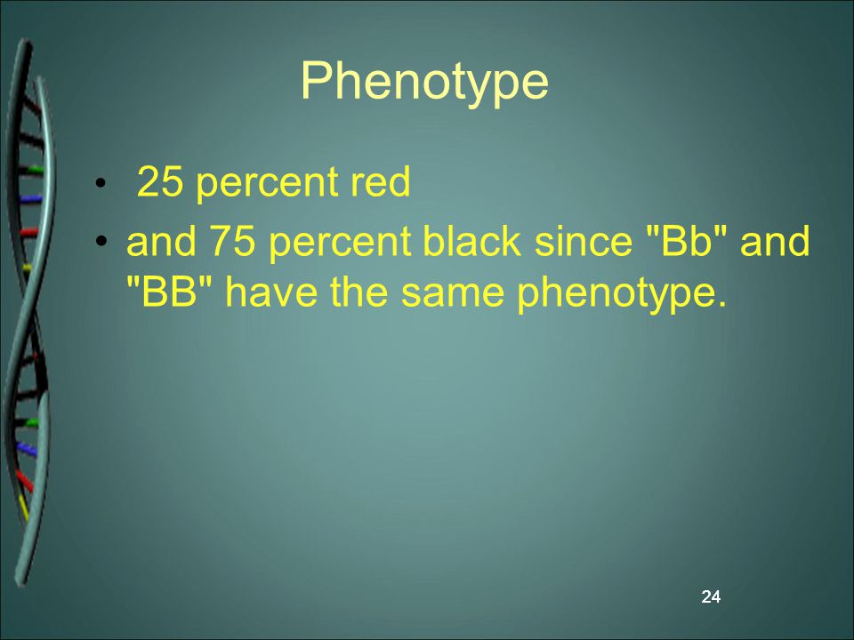 Phenotype 25 percent red and 75 percent black since Bb and BB have the same phenotype. 24