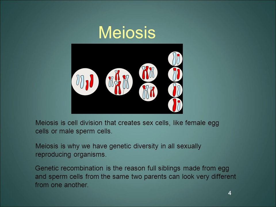 Meiosis Meiosis is cell division that creates sex cells, like female egg cells or male sperm cells.