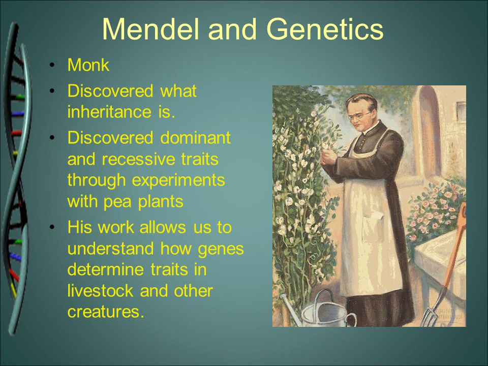 Mendel and Genetics Monk Discovered what inheritance is.