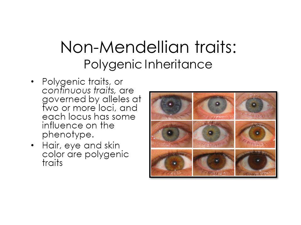 Non-Mendellian traits: Polygenic Inheritance