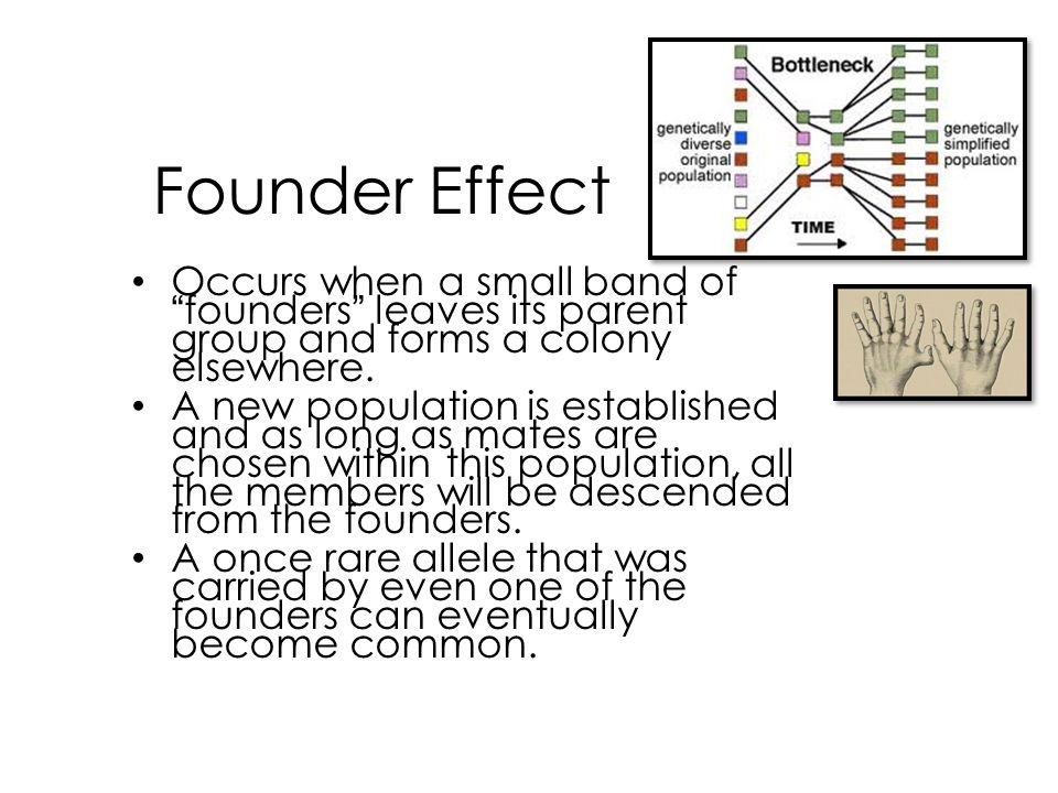 Founder Effect Occurs when a small band of founders leaves its parent group and forms a colony elsewhere.