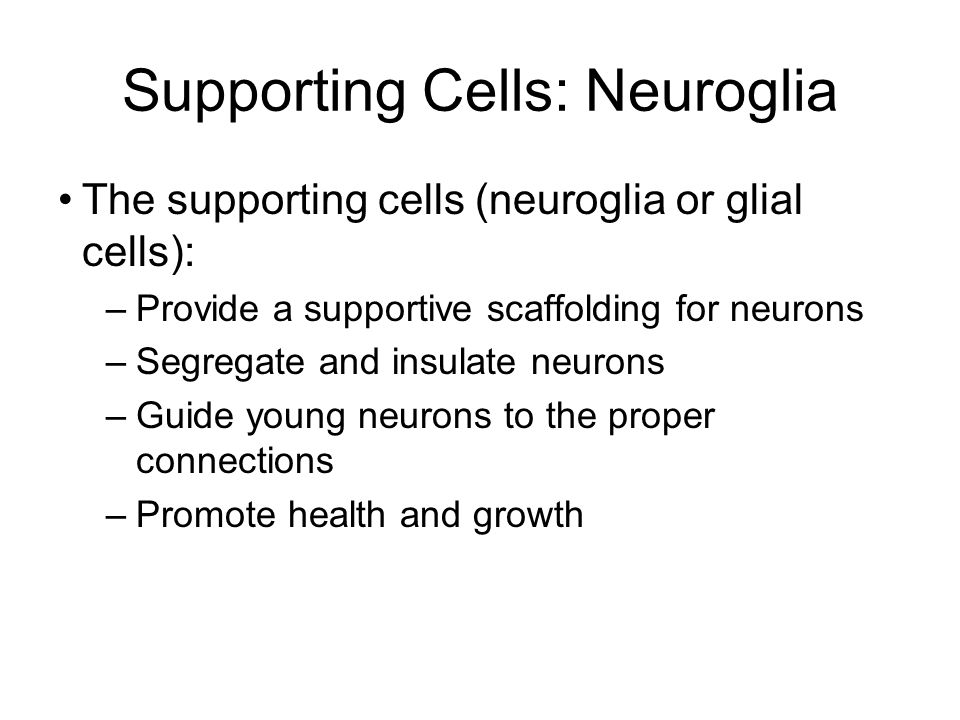 Supporting Cells: Neuroglia