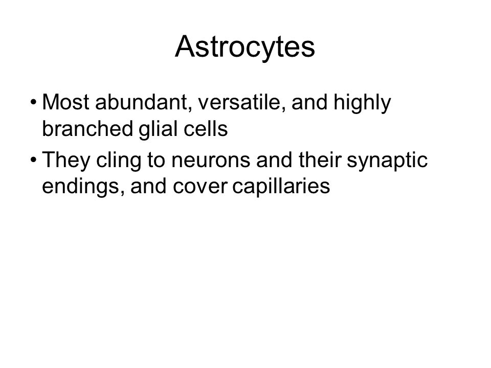 Astrocytes Most abundant, versatile, and highly branched glial cells