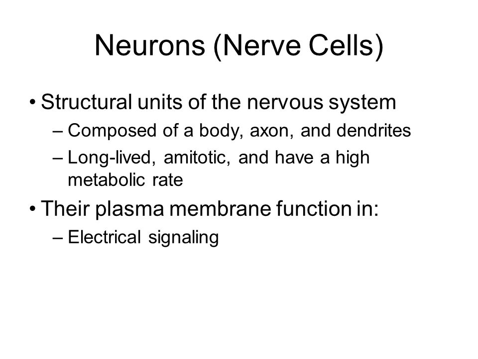 Neurons (Nerve Cells) Structural units of the nervous system