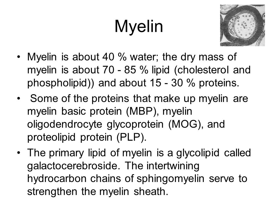 Myelin Myelin is about 40 % water; the dry mass of myelin is about 70 - 85 % lipid (cholesterol and phospholipid)) and about 15 - 30 % proteins.