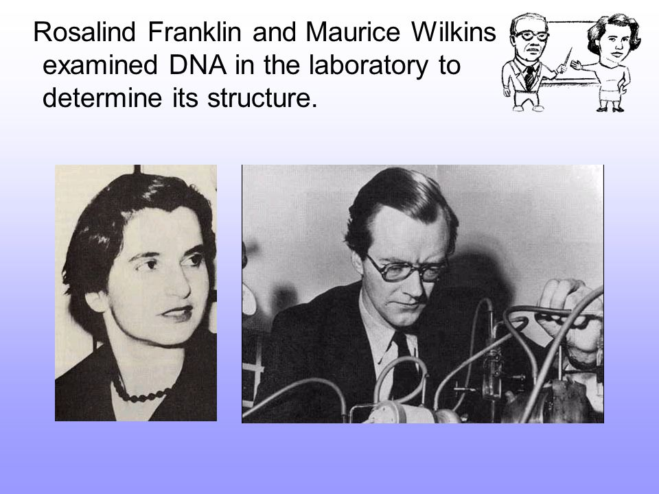 Rosalind Franklin and Maurice Wilkins examined DNA in the laboratory to determine its structure.