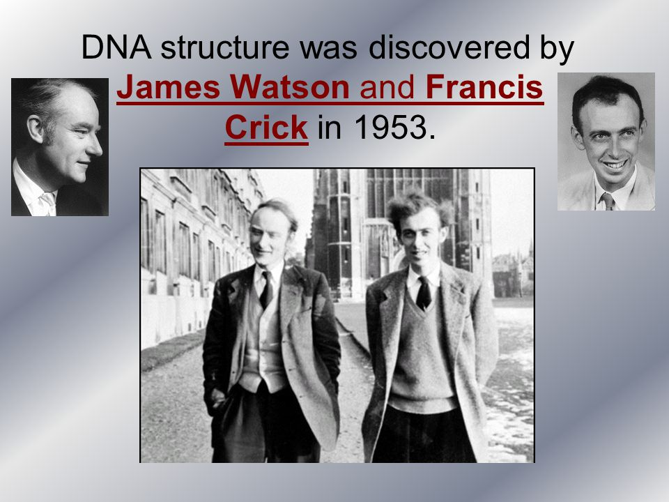 DNA structure was discovered by James Watson and Francis Crick in 1953.
