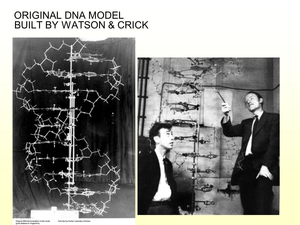ORIGINAL DNA MODEL BUILT BY WATSON & CRICK