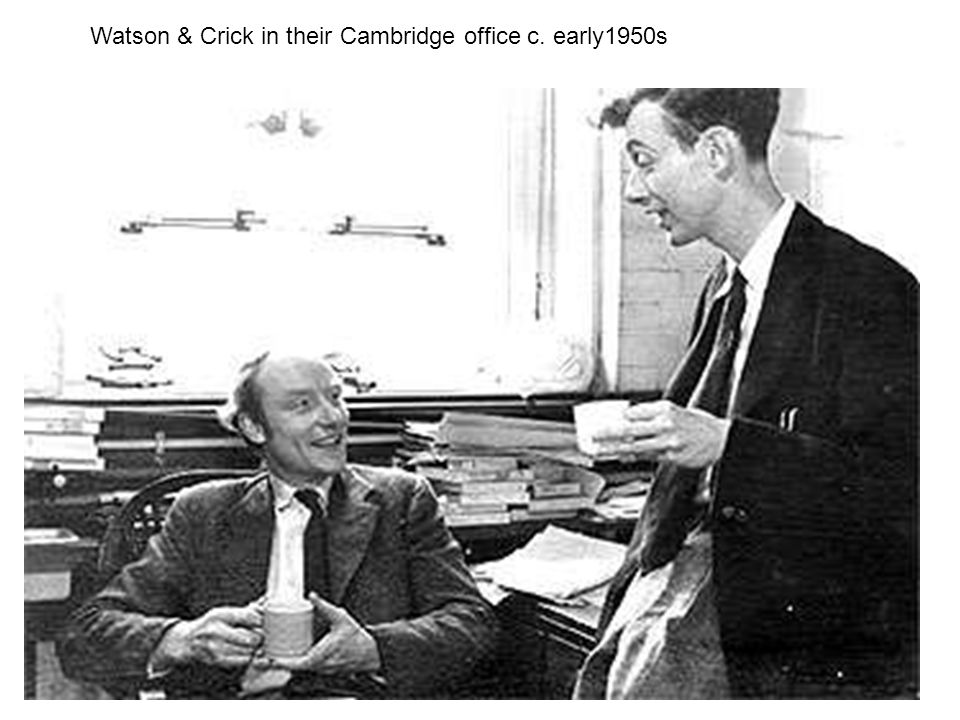 Watson & Crick in their Cambridge office c. early1950s