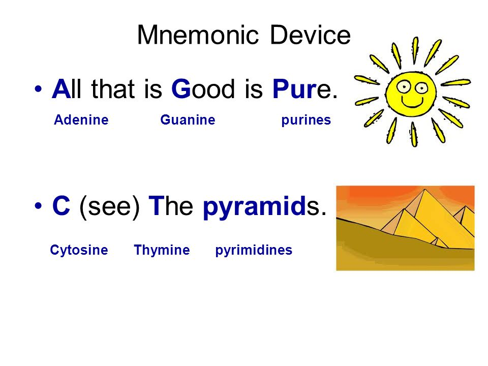 Mnemonic Device All that is Good is Pure. C (see) The pyramids.