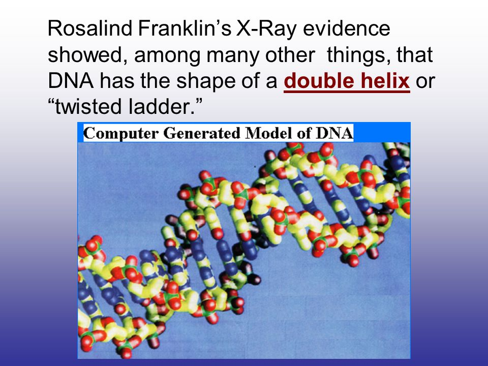 Rosalind Franklin's X-Ray evidence showed, among many other things, that DNA has the shape of a double helix or twisted ladder.