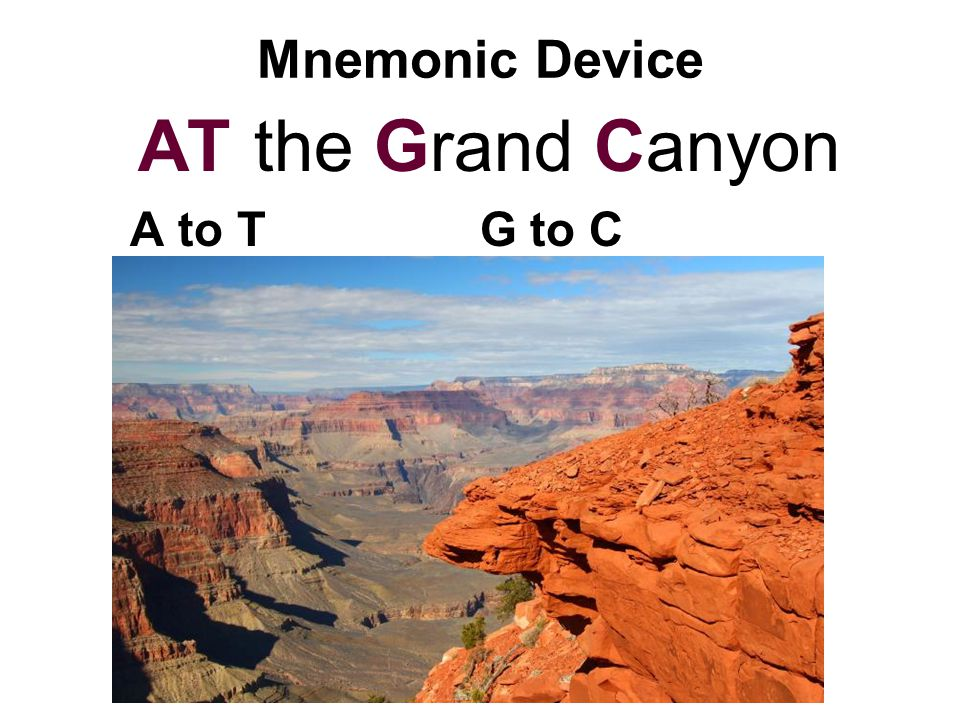 Mnemonic Device AT the Grand Canyon A to T G to C