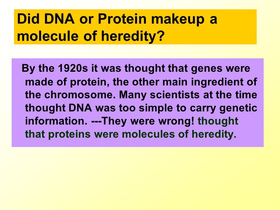 Did DNA or Protein makeup a molecule of heredity