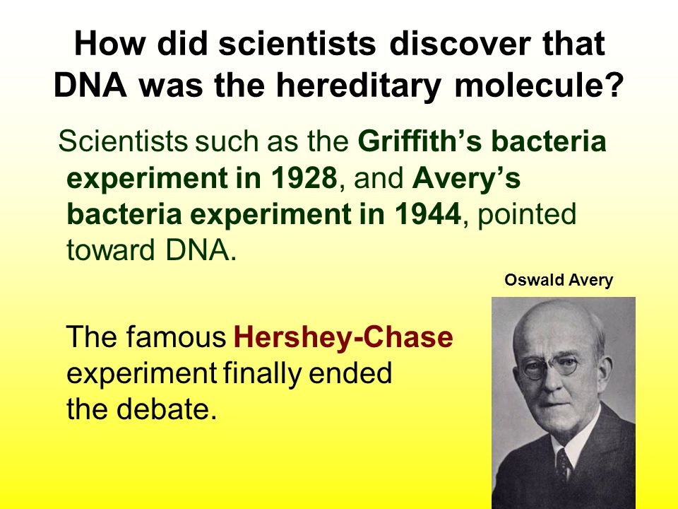 How did scientists discover that DNA was the hereditary molecule